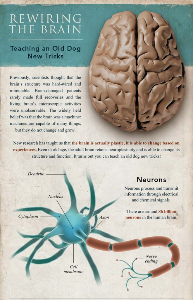 A Graphic explaining Rewiring the brain featuring a brown brain image , a labeled image of a neuron.