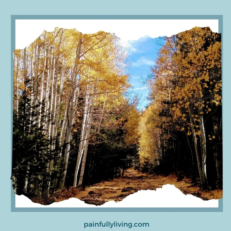 A dirt road covered with golden aspen leaves and big rocks. On either side are the white tree trunks of aspen trees next to green pine.  The road goes off into the distance.