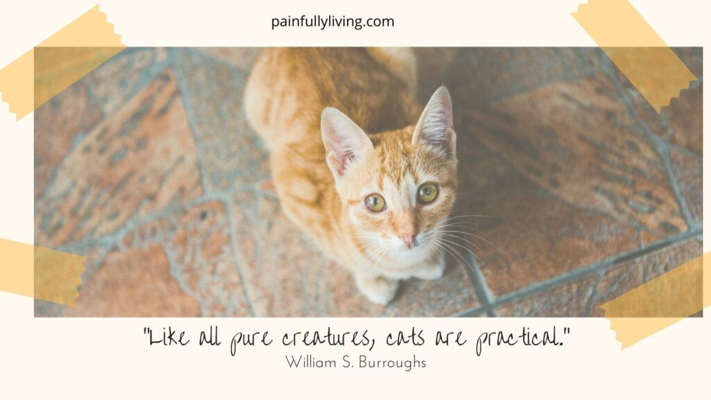 """Orange tabby cate, standing up, staring into the camera, begging. Under is a quote by William S. Burrough, """"Like all pure creatures, cats are practical."""""""
