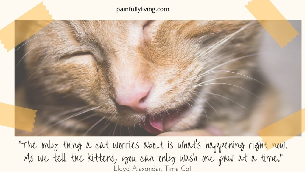 """close up of an orange tabby cat licking; tape on the corners of the photo.  Under in the off-white frame is a quote by Lloyd Alexandar, Time Cat, """"The only thing a cat worries about is what's happening right ow.  As we tell the kittens, you can only wash one paw at a time."""""""