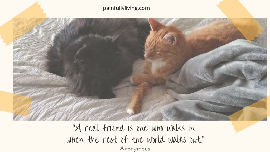 """Willow, black longhair cat, lays next to Scout, orange tabby nestled in blankets.  Both have their paws crossed infront of them. Tape in the corner of the image as if in a photo album.  Under in the off-white frame is  a quote by Anon, """"A real friend is one who walks in when the rest of the world walks out."""""""