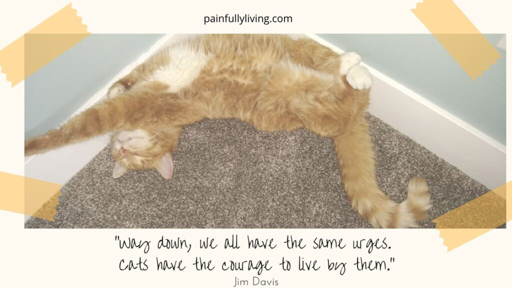 """Scout, orange tabby cat, laying belly up nesseled in the corner, legs up the wall. Tape in the corner of then image like a photo album.  Under in off-white frame is quote by Jim Davis, """"Way down, we all have the same urges. Cats have the courage to live by them."""""""