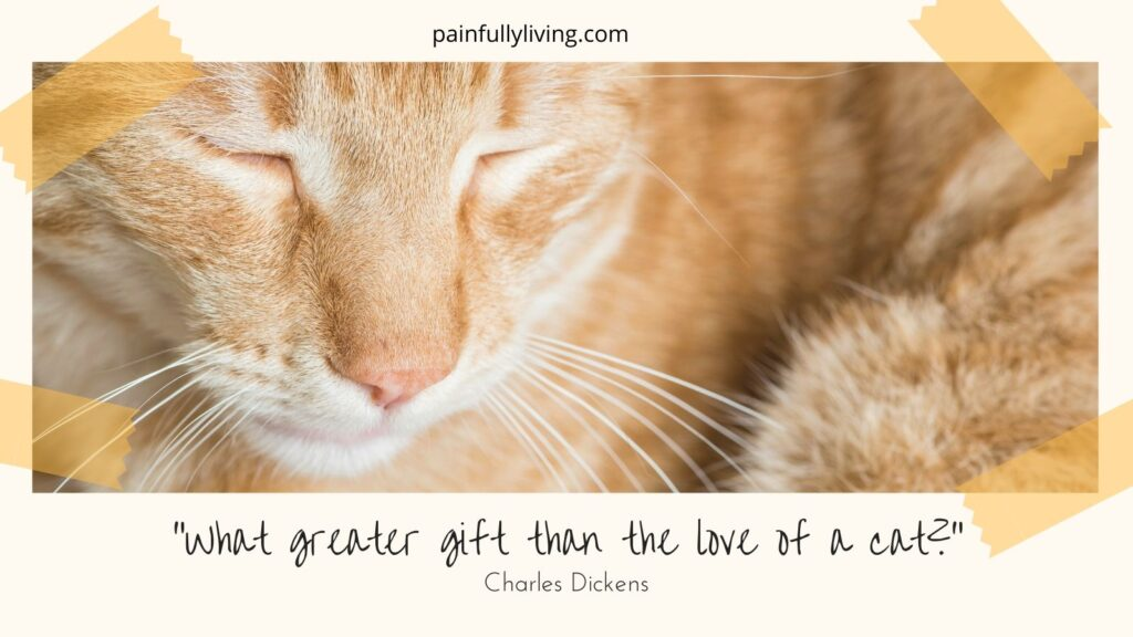 """A close up of , Scout, a cuddled-up orange tiger cat. Tape in the corners as if a photo album. Under is a quote in black text """"What greater gift than the love of a cat?"""" Charles Dickens"""