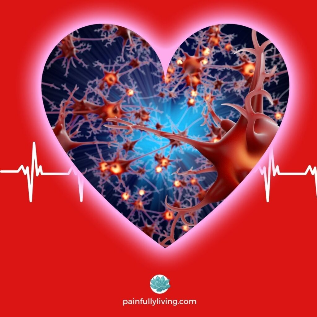 A red background with a heart frame centered, featuring neurons of the autonomic nervous system (ANS).